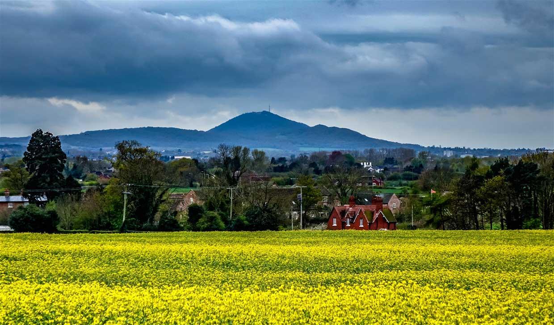 shropshire yellow fields