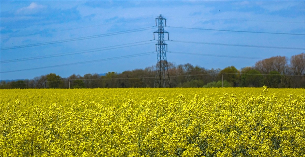 Rapeseed-5- yellow fields