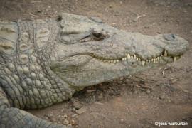SA Wildlife Blog-1- wildlife