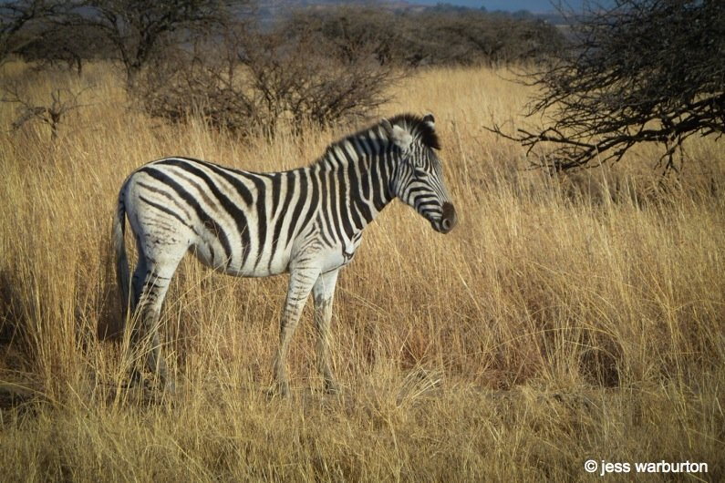 SA Wildlife Blog-5- wildlife