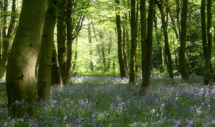sunshine and bluebells