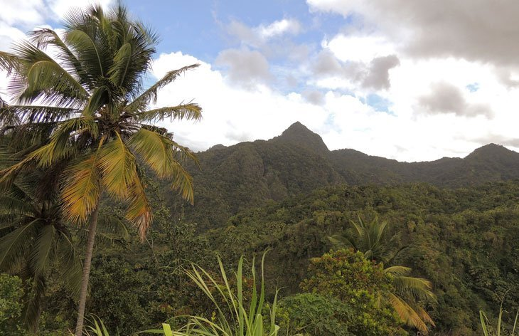 Sarah-Rees-jurassic-forest St Lucia – A Caribbean Jewel