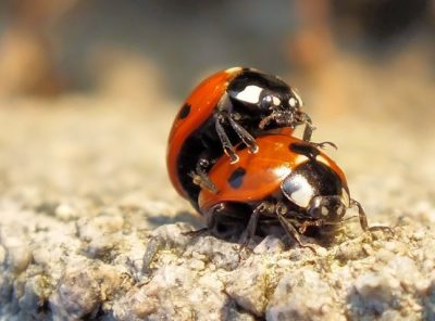 Ladybirds, Ladybugs: The Full Monty