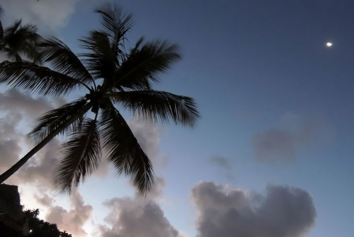 Sarah-Rees-palm-moon Starlight and Birdsong – A Perfect Day in St Lucia