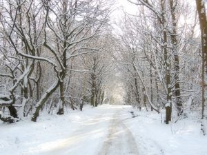 Sarah-Rees-snow-forest