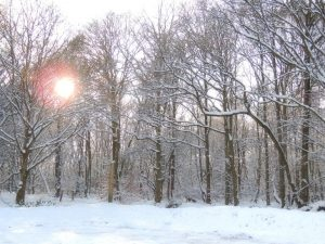 Sarah-Rees-snow-forest-sunset