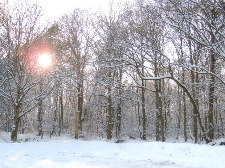 Sarah-Rees-snow-forest-sunset A Winter Woodland