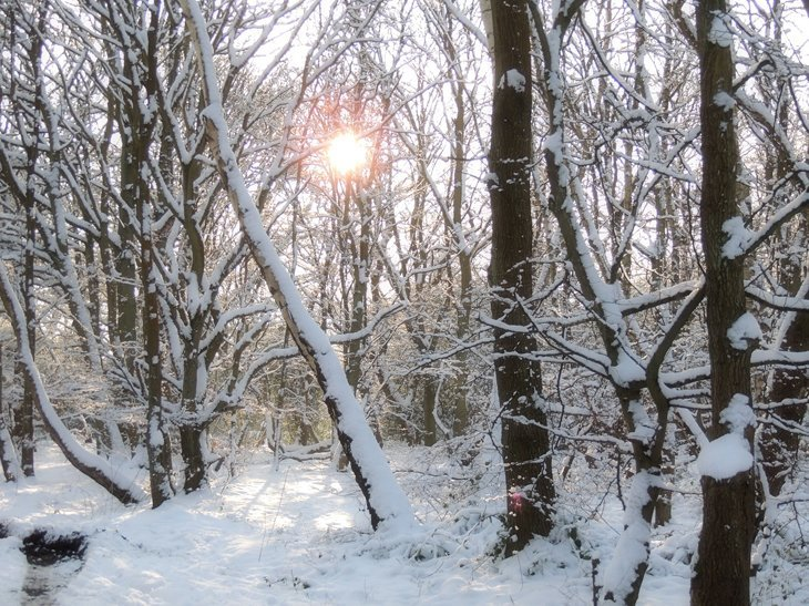 Sarah Rees winter forest flare A Winter Woodland