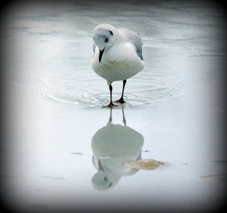 Seagull-refection Live And Love A Passion For Photography