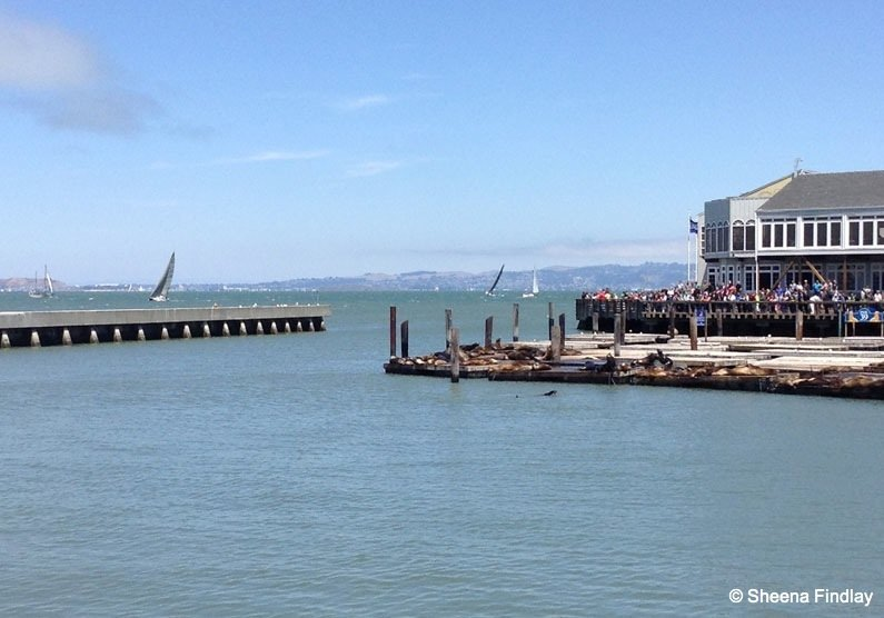 Seals-basking-in-the-sun-on-Pier-39 Beyond the streets of San Francisco