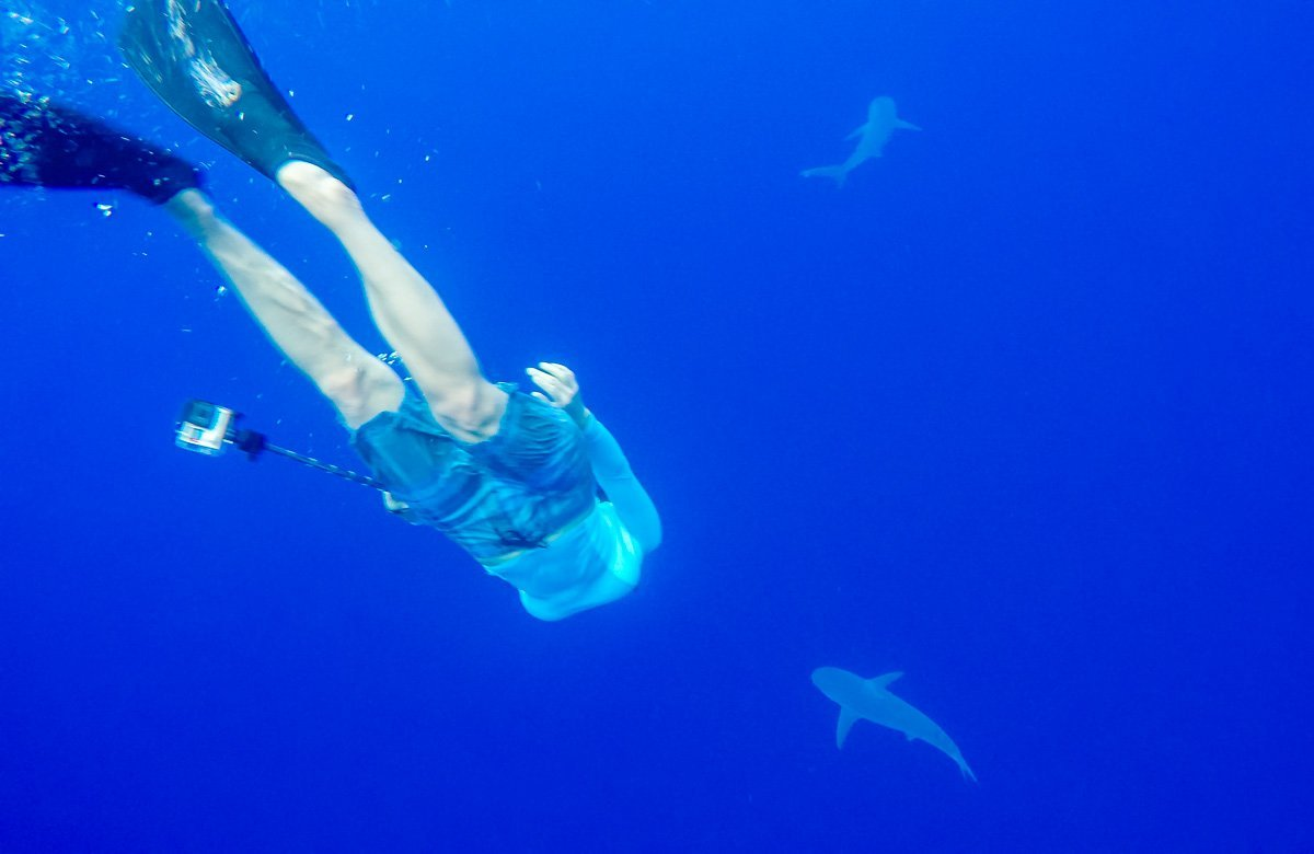 Shark Diving in Oahu, Hawaii
