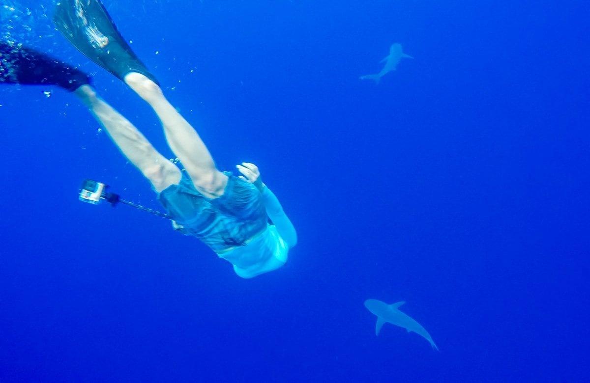 Shark-Diving2-2018 Shark Diving in Oahu, Hawaii