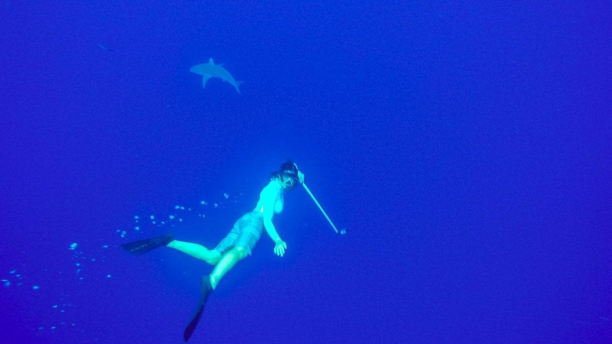 Shark-Diving4-2018 Shark Diving in Oahu, Hawaii