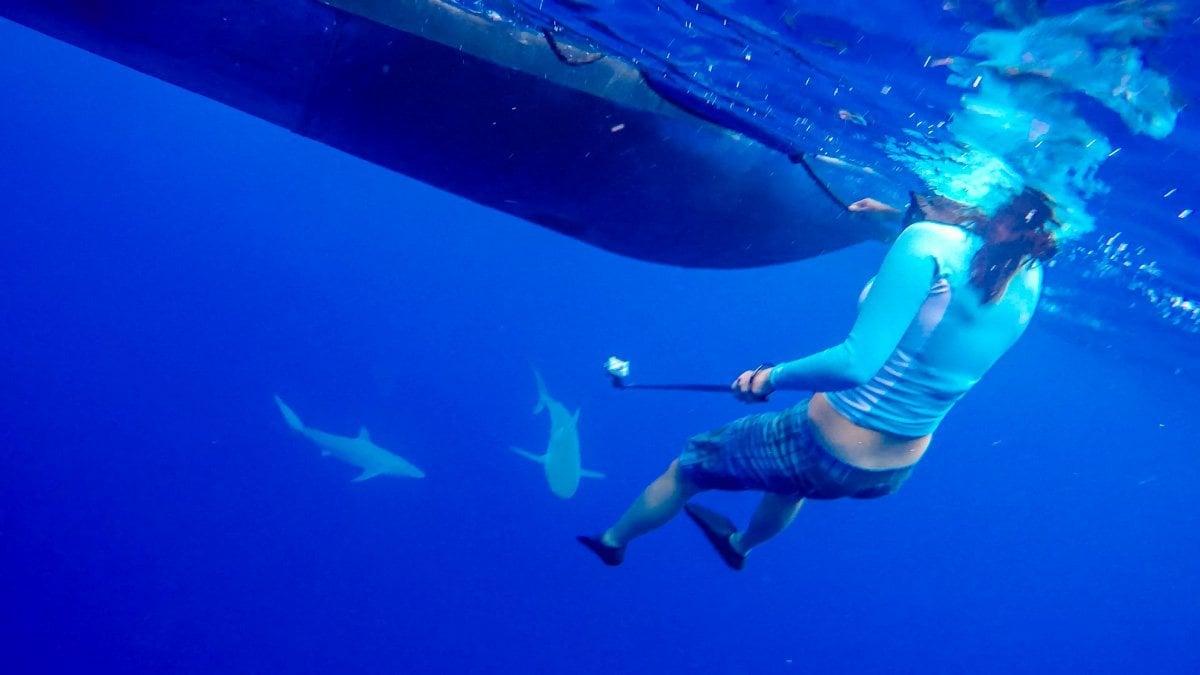 Shark-Diving9-2018 Shark Diving in Oahu, Hawaii