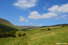 Sheep Pasture- wales