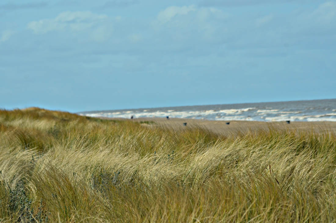 Six Marshes Beach Walk-5