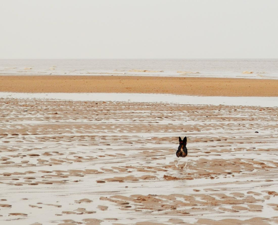 Six Marshes Beach Walk-8