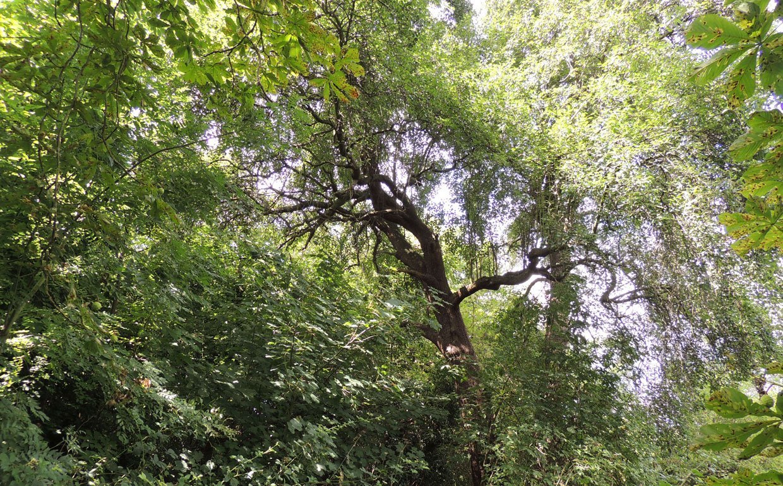Southwark-Wood-8b A Walk on the Wild Side….  In London's Southwark Woods