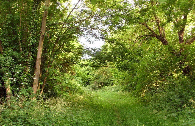 Southwark-Woods-Pic-1
