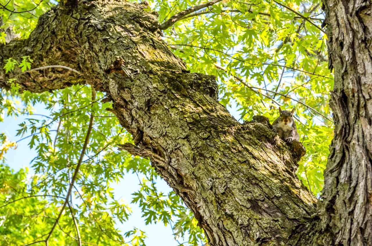 Squirrel-watching Niagara-On-The-Lake – Photos and More