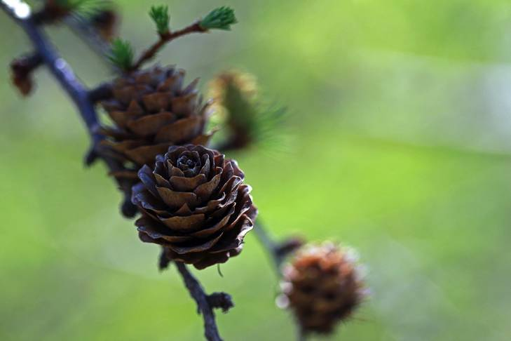 TDean_006_003 Blossoms, Cones and Other Hidden Treasures – A Macro Escape