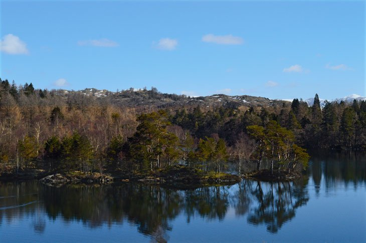reflections of trees on the tarn
