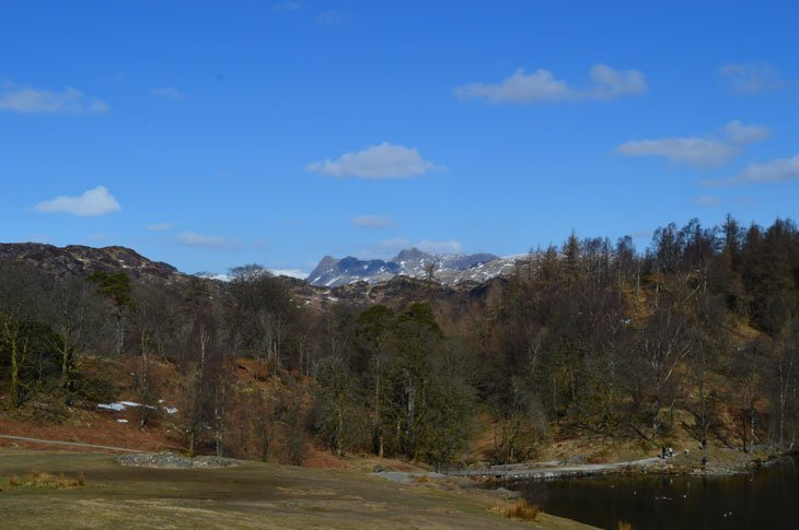 Tarn Hows and langdale pikes behind