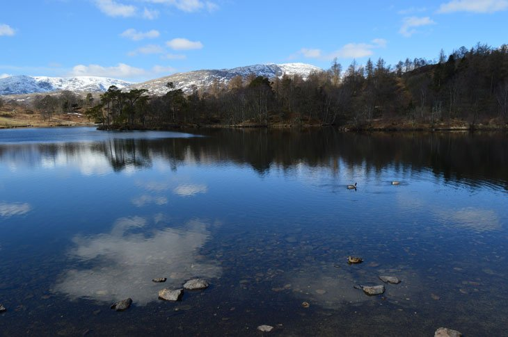 Tarn_Haws_0249 Tarn Hows – An Icon Of The Lakes
