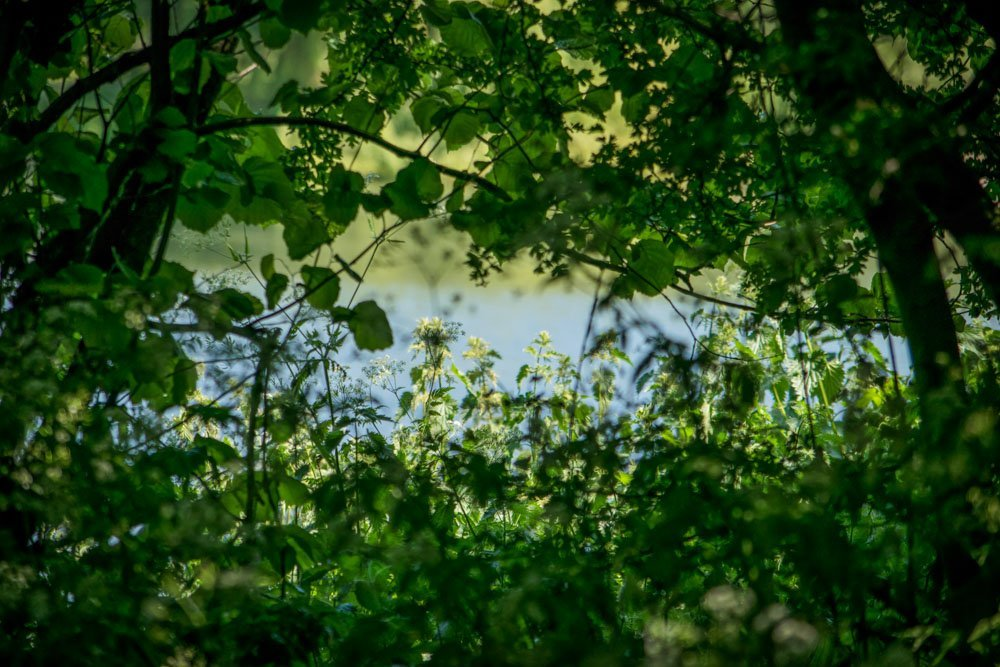 Through-the-Trees Walthamstow Wetlands: Wild London