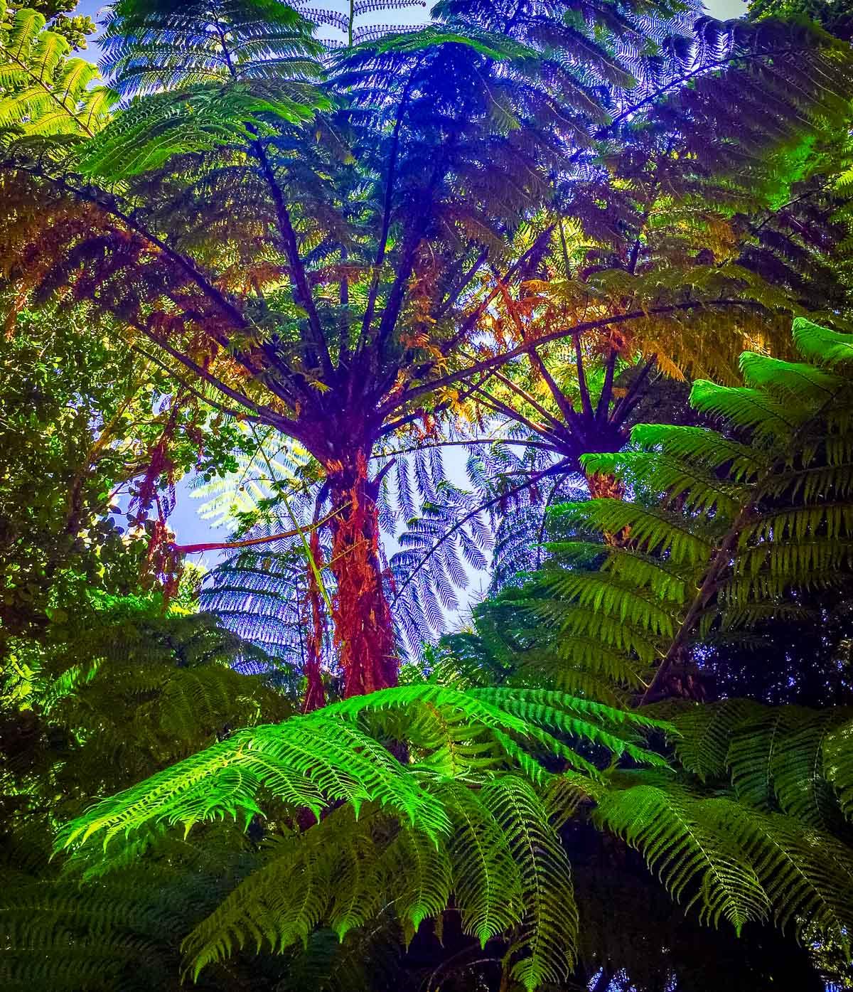 Tree-Ferns Pukaha Mount Bruce: National Wildlife Centre, New Zealand