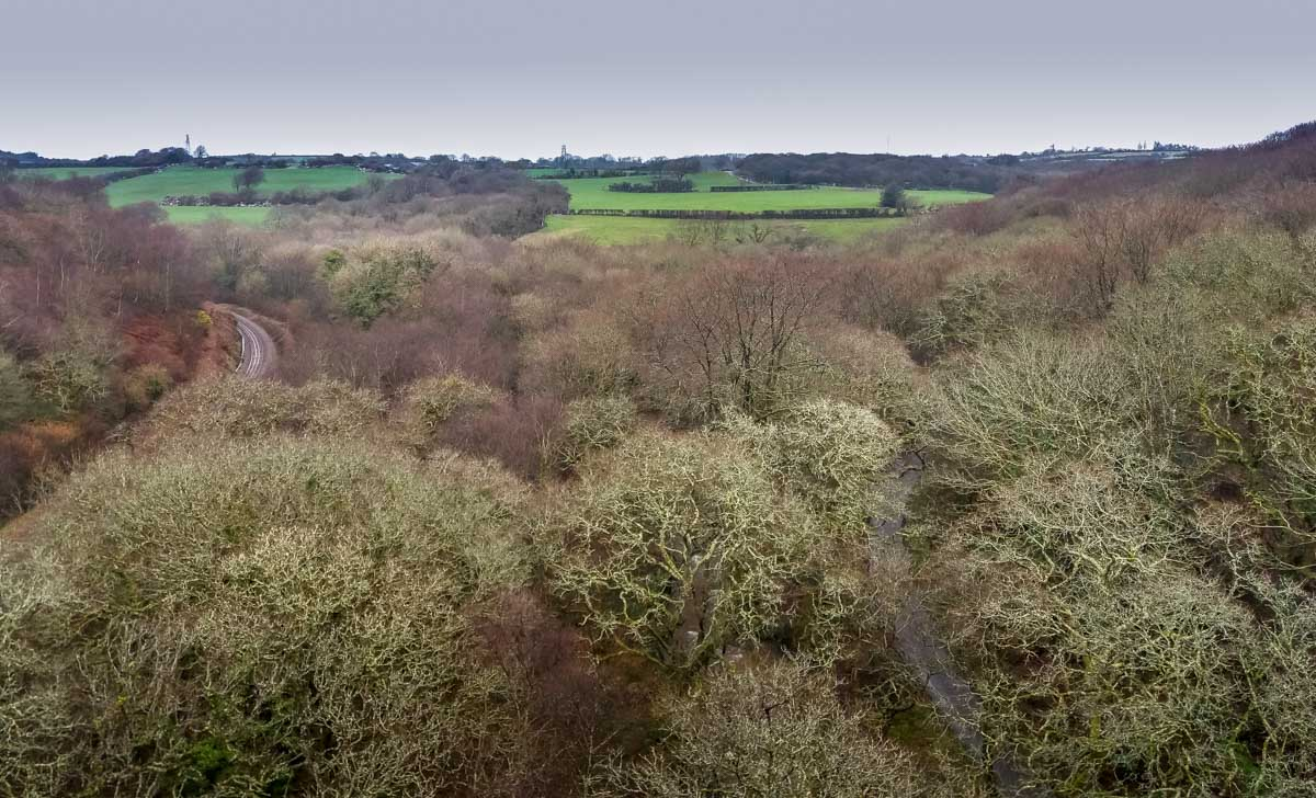 Tree-tops-looking-from-the-viaduct Luxulyan Valley Walk, Cornwall – Industrial Heritage and Natural Beauty