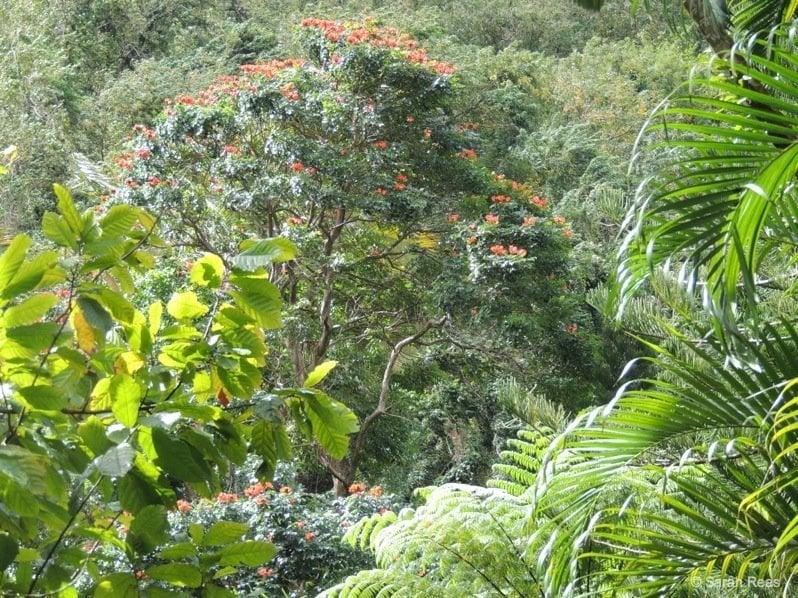 Tropical-Ferns-Ferns The Beauty of Ferns