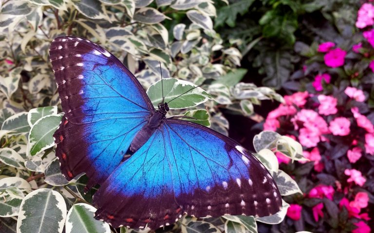 Walking with Butterflies