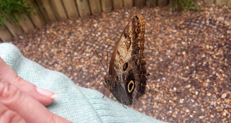 butterfly on sleeve