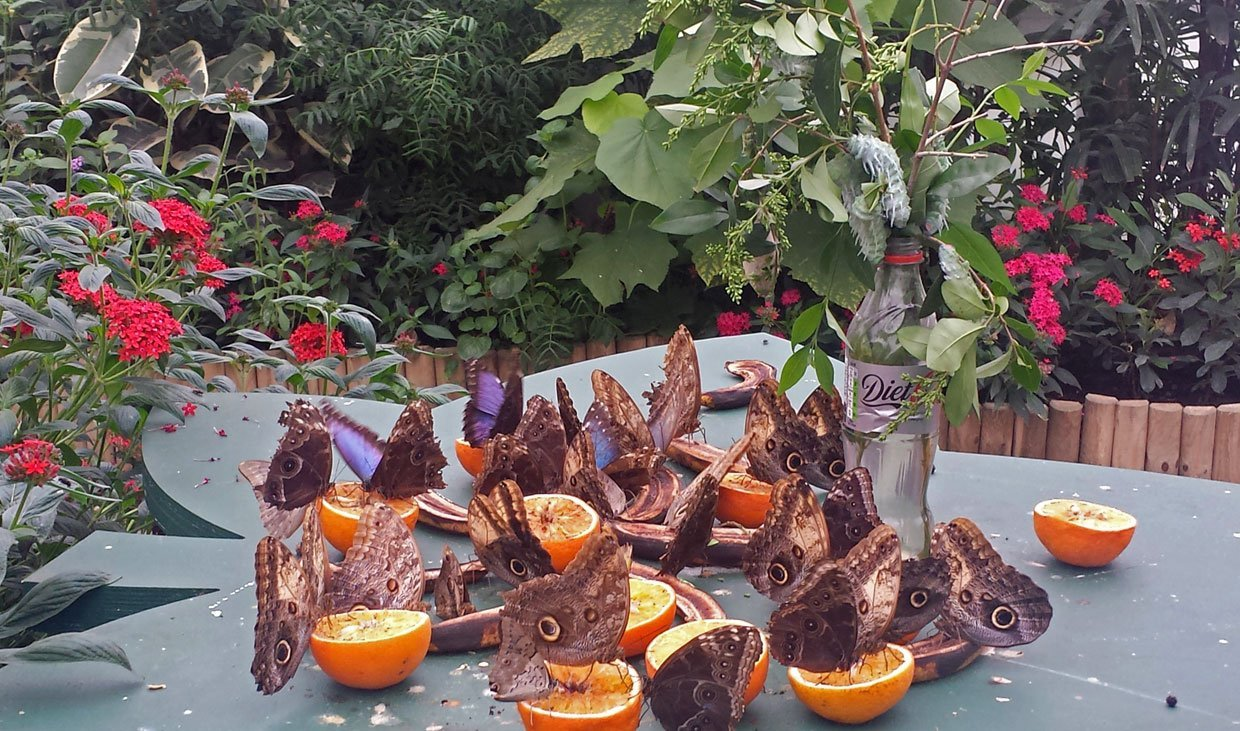 butterfly feeding station with oranges
