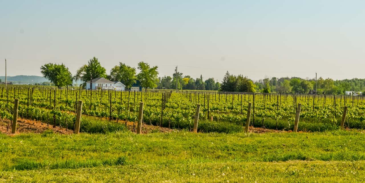 Wine-region Ice Wine Tasting – Lakeview Wine Co,  Niagara-on-the-lake, Canada