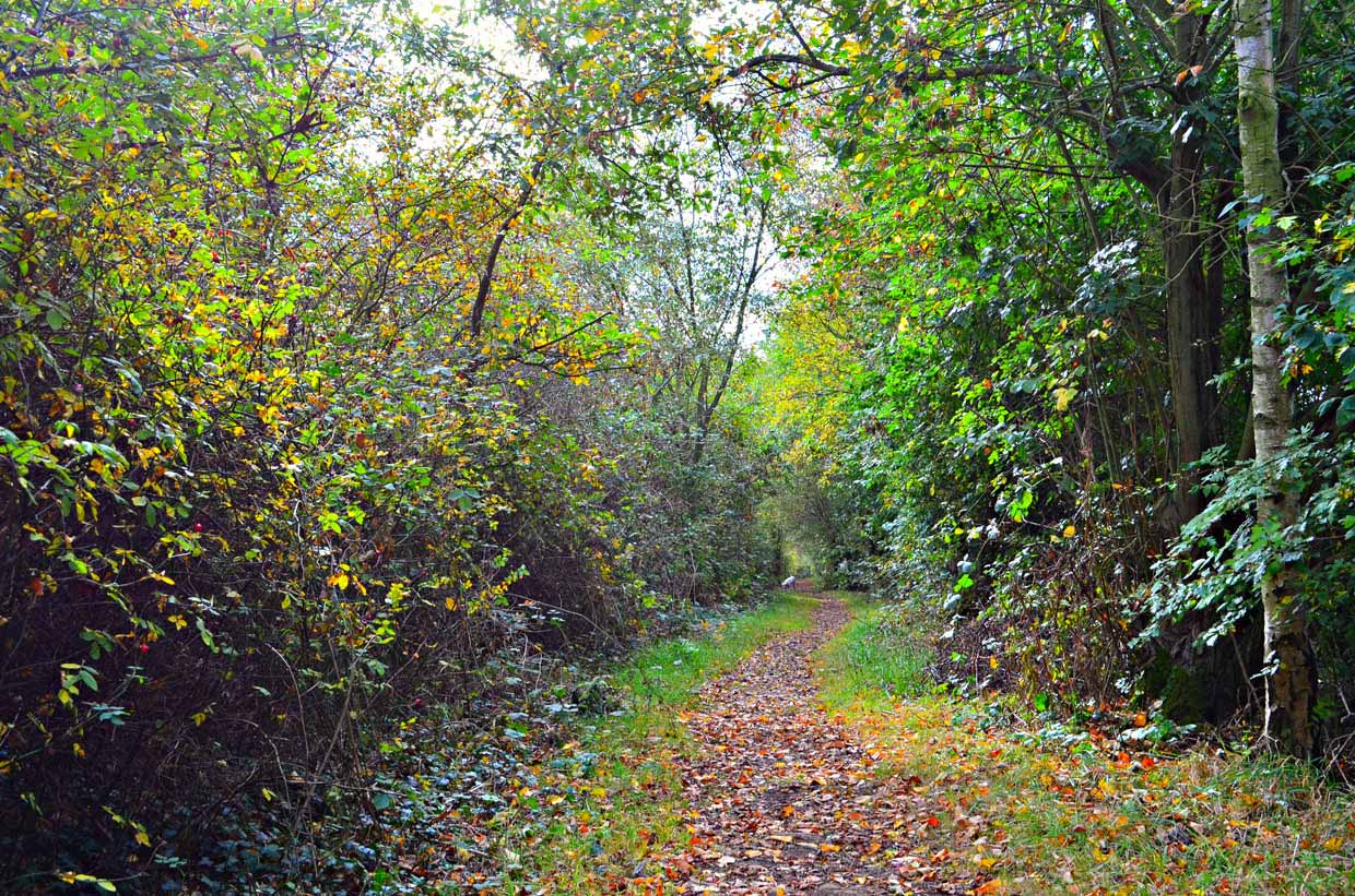 Woodland-Path1 Strelley Village and Hall, a Nottinghamshire Gem