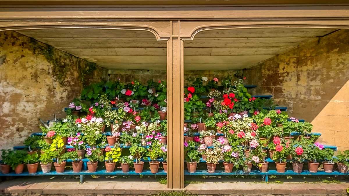 beautiful-display_ Calke Abbey Ancient Parkland Walks Through the Seasons