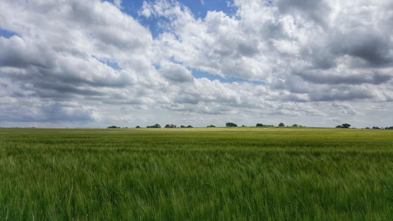 parkland grass view