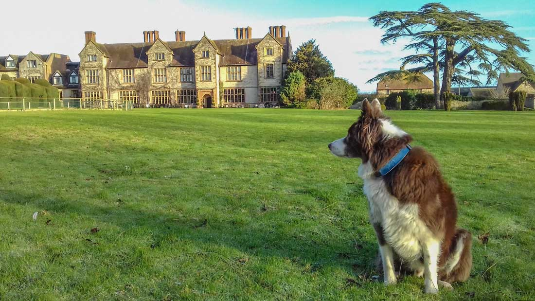 Billesley Manor Hotel: Pet Friendly Bliss