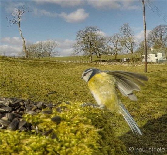 bird-cam-gopro-10-gardencam Gardencam highlights – Pre Spring
