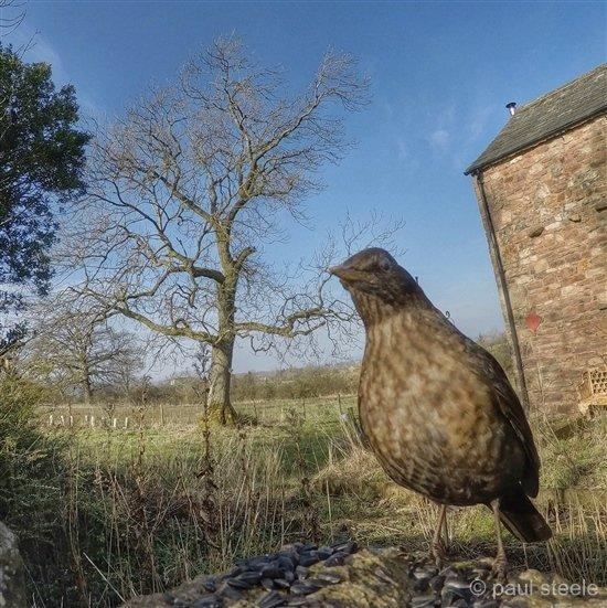 bird-cam-gopro-6-gardencam Gardencam highlights – Pre Spring