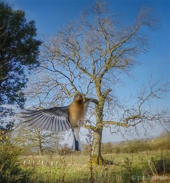 bird-cam-gopro-7-gardencam Gardencam highlights – Pre Spring