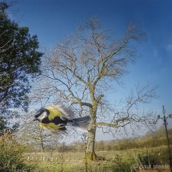 bird-cam-gopro-8-gardencam Gardencam highlights – Pre Spring