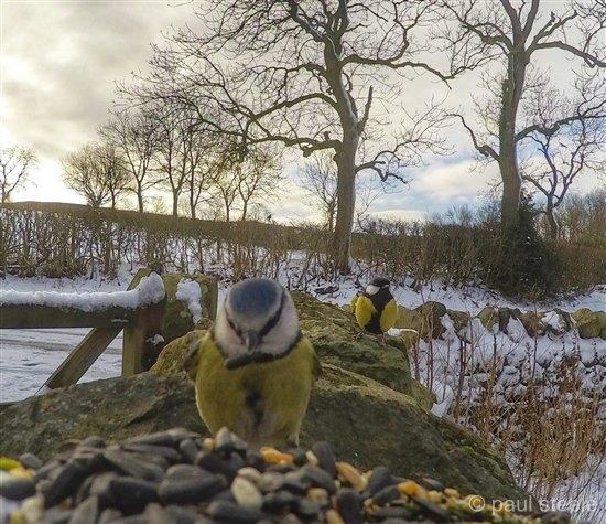 bird-cam-gopro-gardencam Gardencam highlights – Pre Spring