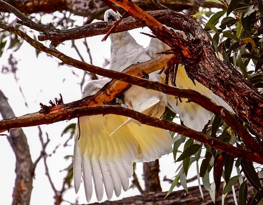 Bird Garden Visitors of New South Wales, Australia