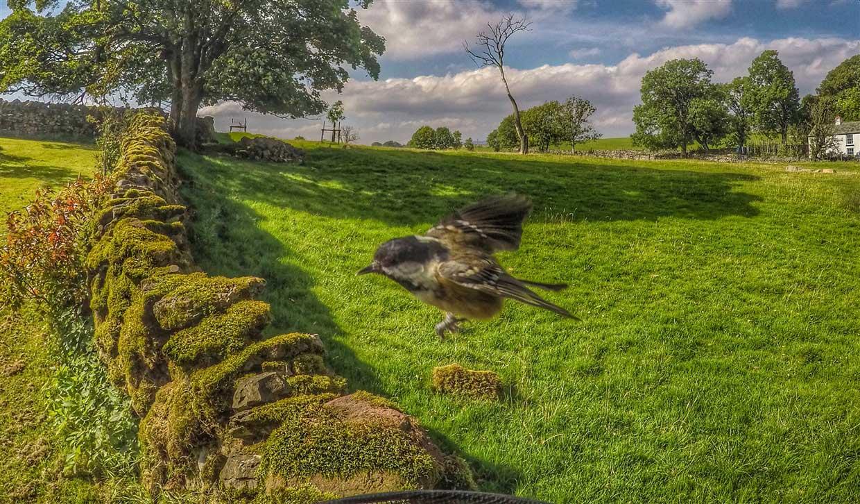 birds-10-gopro Gardencam Highlights – A Summer in Cumbria