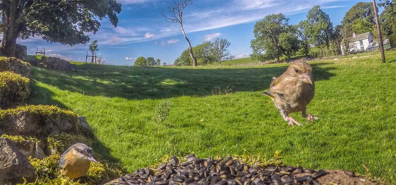 birds-11-gopro Gardencam Highlights – A Summer in Cumbria