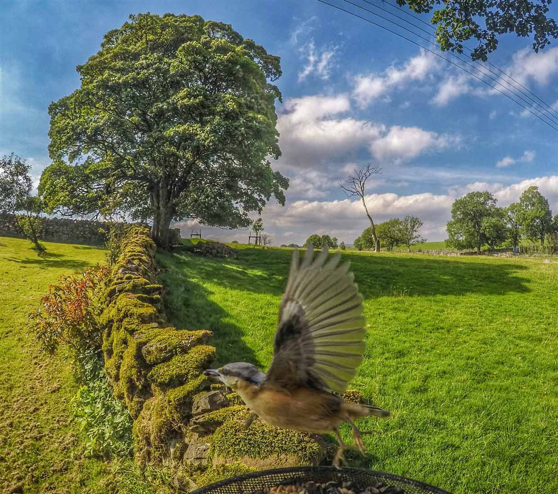 birds-12-gopro Gardencam Highlights – A Summer in Cumbria