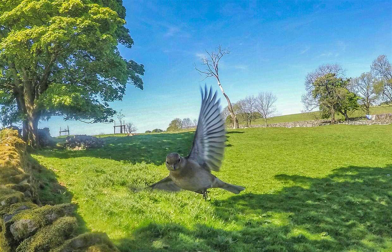birds-13-gopro Gardencam Highlights – A Summer in Cumbria